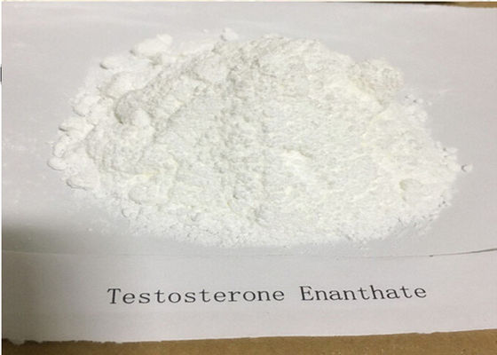 China Test Enanthate Powder Legal Injectable Steroids Hormone CAS 315 37 7 For Muscle Gaining supplier