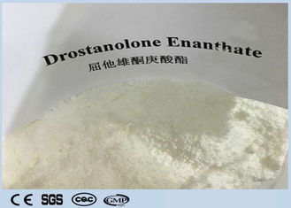 China Cutting Cycles  Anabolic Masteron Steroid White  Powder Drostanolone Enanthate  For Anti Aging CAS472-61-145 supplier