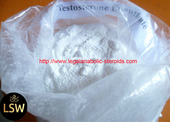 99% Purity CAS 315-37-7 White Cutting Cycle Steroids Powder Testosterone Enanthate For Fast Muscle
